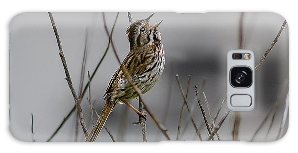 Savannah Sparrow Galaxy Case by Marty Saccone