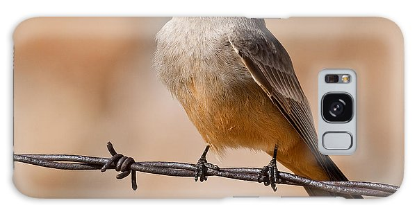 Say's Phoebe On A Barbed Wire Galaxy Case