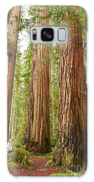 Tree Galaxy Case - Scale - The Beautiful And Massive Giant Redwoods Sequoia Sempervirens In Redwood National Park. by Jamie Pham