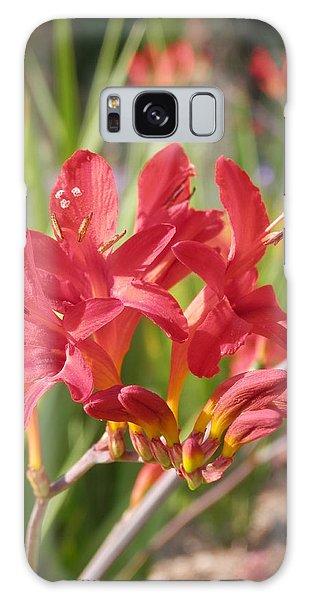 Scarlet Beauty 1 Galaxy Case