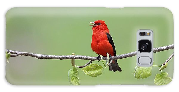 Scarlet Tanager Galaxy Case