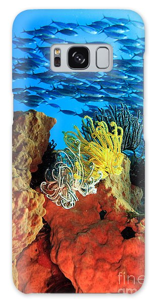 Feather Stars Galaxy Case - School Of Fishes by MotHaiBaPhoto Prints