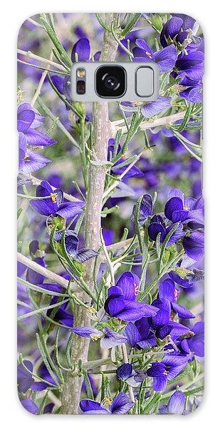 Desert Flora Galaxy Case - Schott's Dalea (psorothamnus Schottii) In Flower by Bob Gibbons/science Photo Library