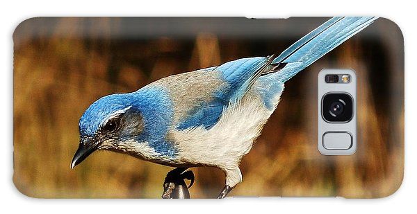 Scrub Jay Galaxy Case