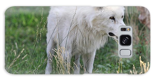 Scruffy White Wolf Galaxy Case