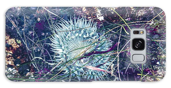 Sea Anenome - Terrestrial Flower Galaxy Case by Terry Rowe