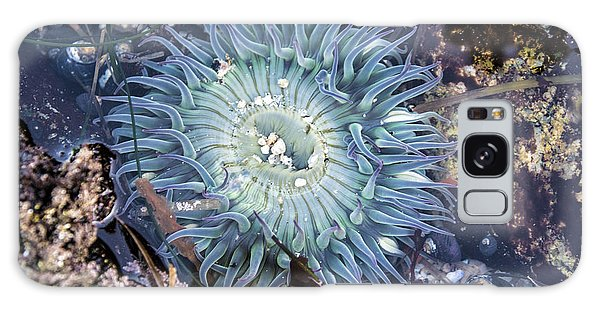 Sea Anenome Galaxy Case by Terry Rowe