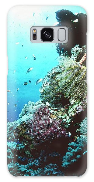 Sea Lily Galaxy Case - Sea Lilies On A Reef by Matthew Oldfield/science Photo Library