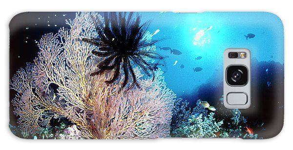Sea Lily Galaxy Case - Sea Lily On A Coral by Matthew Oldfield/science Photo Library