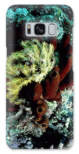 Sea Lily Galaxy Case - Sea Lily On A Sponge by Matthew Oldfield/science Photo Library