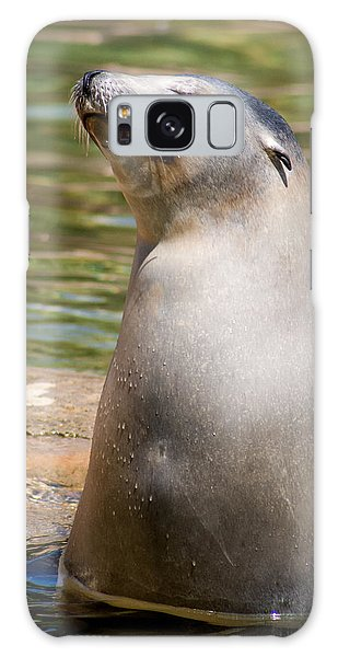 Sea Lion Portrait Galaxy Case