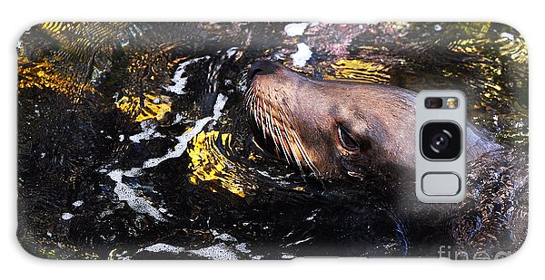 Sea Lion Posing For A Headshot Galaxy Case
