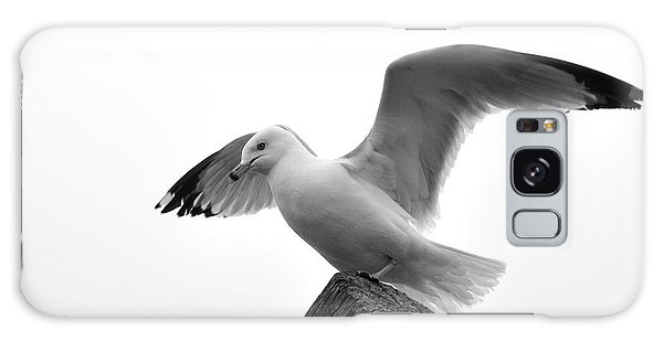 Seagull In Black And White Galaxy Case by Todd Soderstrom