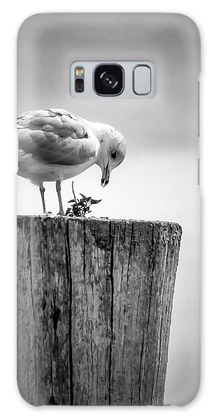 Seagull On Pier  Galaxy Case by Brian Caldwell