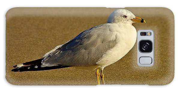 Seagull On The Beach Galaxy Case