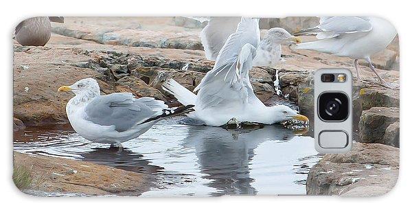 Seagull Swimming Pool - Acadia Galaxy Case
