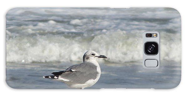 Seagulls At Fernandina 6 Galaxy Case
