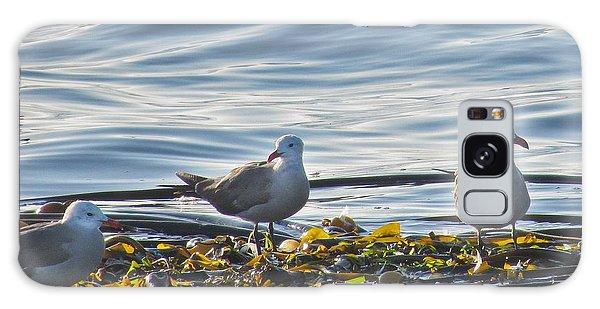 Seagulls In Victoria Bc Galaxy Case