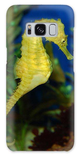 Seahorse Galaxy Case