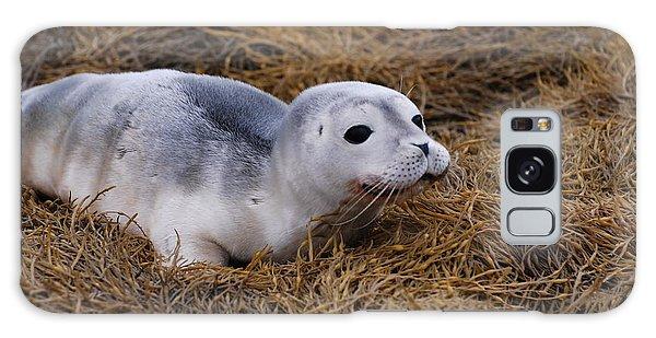 Seal Pup Galaxy Case by DejaVu Designs