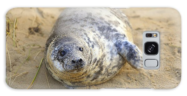 Seal Pup On The Beach Galaxy Case