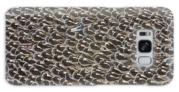 Semipalmated Sandpipers Sleeping Galaxy Case by Yva Momatiuk John Eastcott