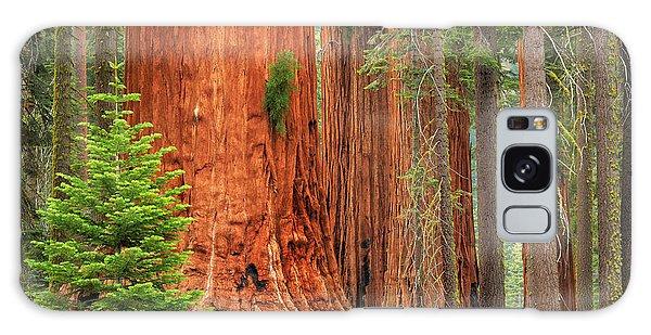 Sequoias Galaxy Case