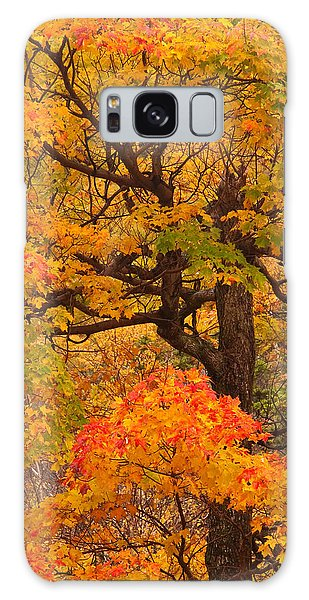 Shapely Maple Tree Galaxy Case