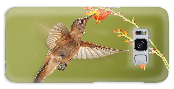 Shining Sunbeam Hummingbird Galaxy Case