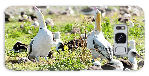Short-tailed Albatross (phoebastria Galaxy Case by Daisy Gilardini