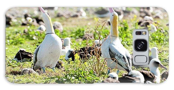 Short-tailed Albatross (phoebastria Galaxy Case