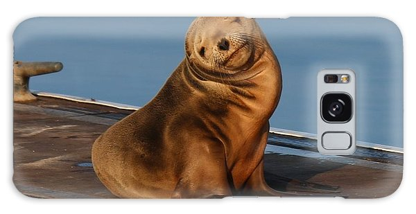 Shy Sea Lion Pup  Galaxy Case by Christy Pooschke