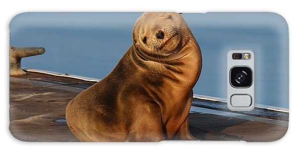 Shy Sea Lion Pup  Galaxy Case