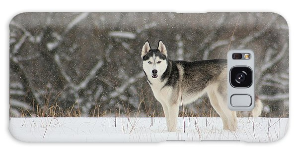 Siberian Husky 20 Galaxy Case by David Dunham