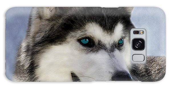 Siberian Husky Galaxy Case by Linsey Williams