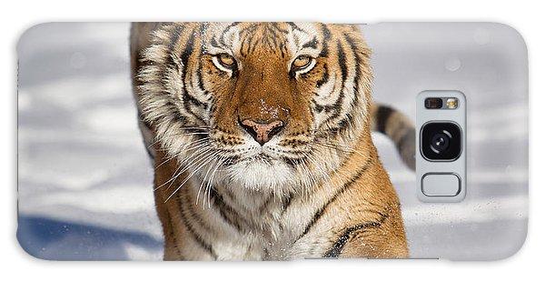 Siberian Tiger Coming Forward Galaxy Case