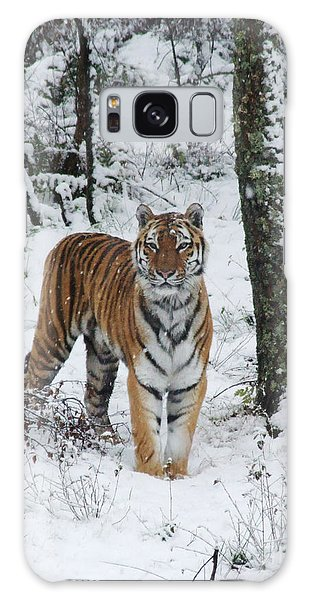 Galaxy Case - Siberian Tiger - Snow Wood by Phil Banks