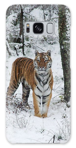 Siberian Tiger - Snow Wood Galaxy Case