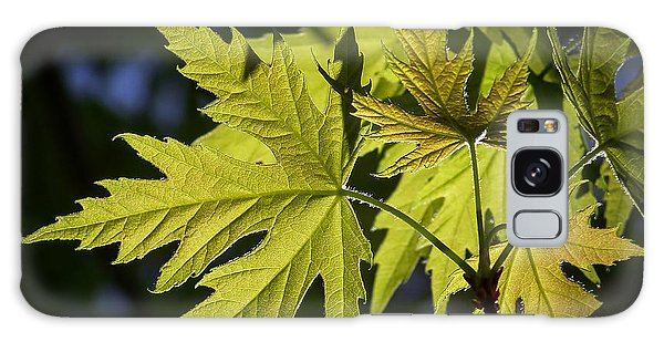 Silver Maple Galaxy Case by Ernie Echols
