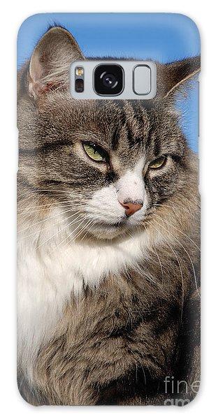 Silver Tabby Cat Galaxy Case