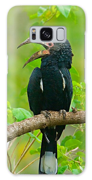 Silvery-cheeked Hornbill Perching Galaxy Case