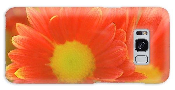 Hybrid Galaxy Case - Single Chrysanthemum 'macho' by Maria Mosolova/science Photo Library
