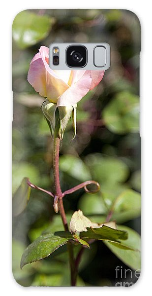 Single Rose Galaxy Case by David Millenheft