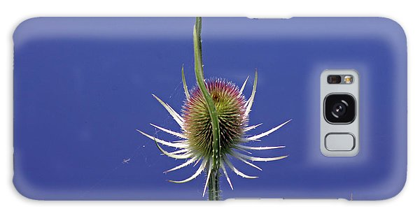 Single Teasel Galaxy Case by Tony Murtagh