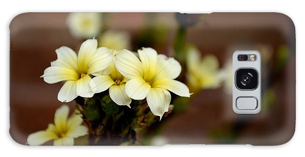 Sisyrinchium Striatum Galaxy Case