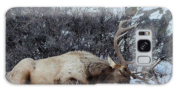 Sleeping Elk Galaxy Case