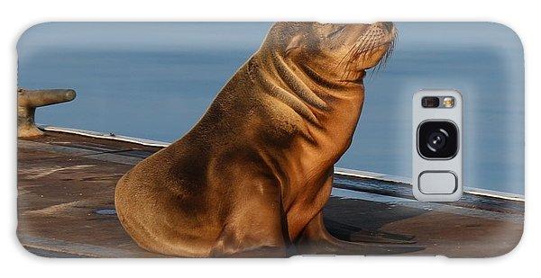 Sleeping Wild Sea Lion Pup  Galaxy Case