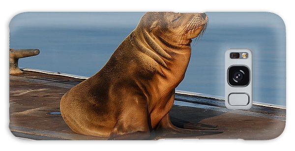 Sleeping Wild Sea Lion Pup  Galaxy Case