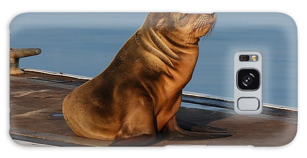 Sleeping Wild Sea Lion Pup  Galaxy Case by Christy Pooschke