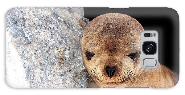 Sleepy Baby Sea Lion Galaxy Case